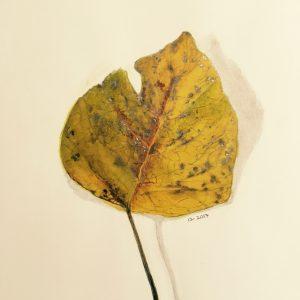 Fallen Leaf by Patricia Moretti, Watercolor, 2017