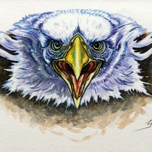 "<b>Guillermo Aranda</b> <i>Eagle Vision</i>, watercolor, 8"" x 15"", 2009"